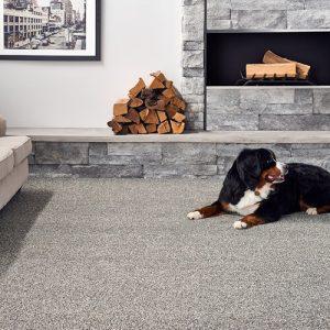 Dog on Carpet | Barrett Floors