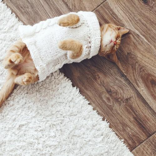 Cat on hardwood floor | Barrett Floors